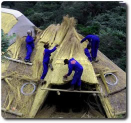 Cintsa Thatching team thatching a roof renovation